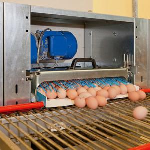 produkte-eiersammlung-broiler-eltern